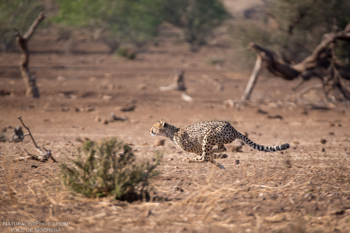 http://www.c4photosafaris.com/uploader/images/_KDN0649.jpg